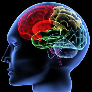 پیوندهای مهم مغز و اعصاب کودکان